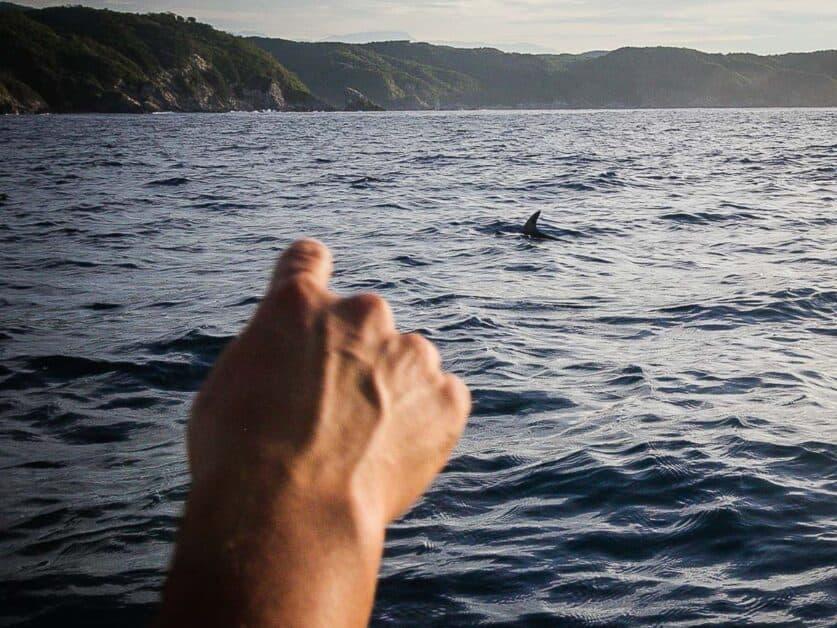 dolphin zipolite