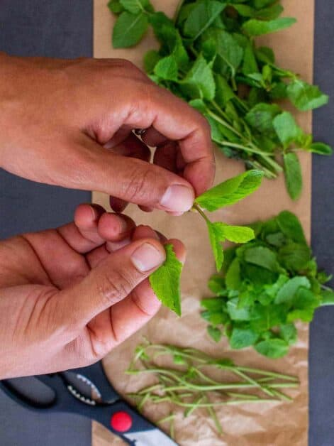 separating mint leaves from stems