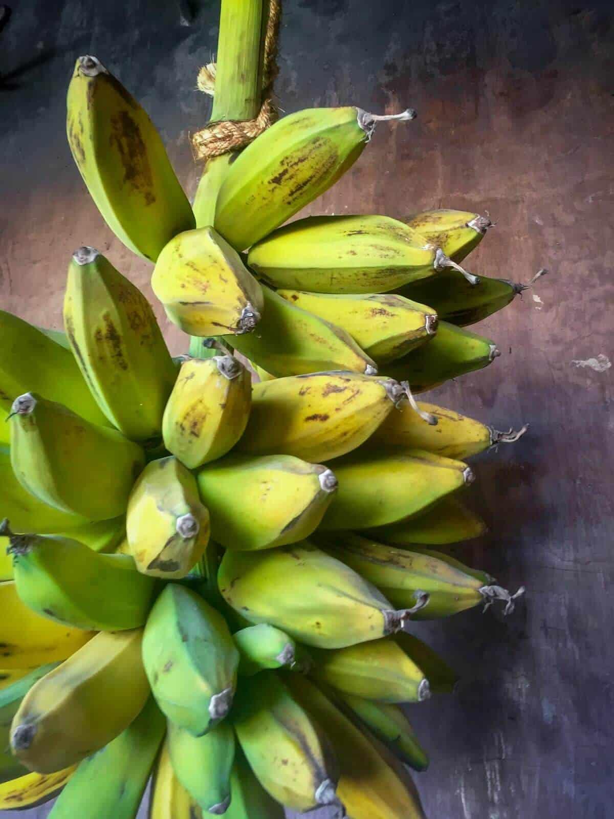 three-points plantains