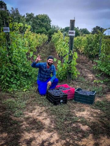 vintage-vineyard